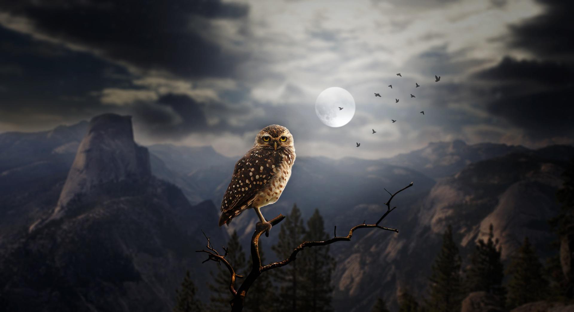 owl-2320703_1920